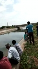 Crocodile in panipat river